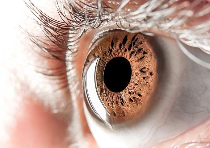 Como funciona o olho humano ?